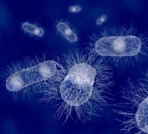 pathogenesis-1